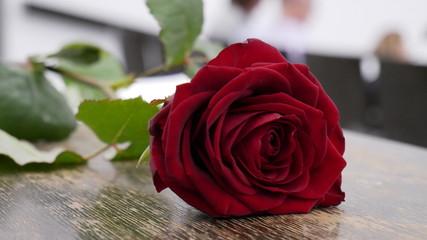 Rose bei Abschluss