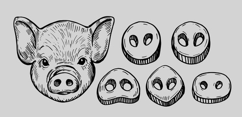 Pig head. Hand drawn illustration converted to vector