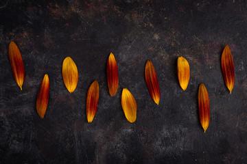 Orange petals on grunge