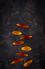 Orange petals on grunge vertical