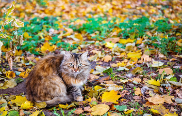 Wary cat in autumn