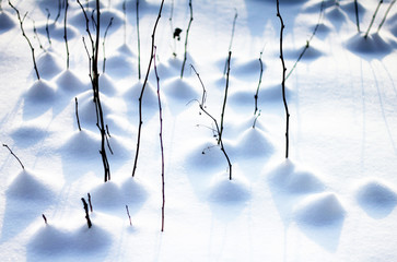 branches growing through snow with beautiful abstract shadows