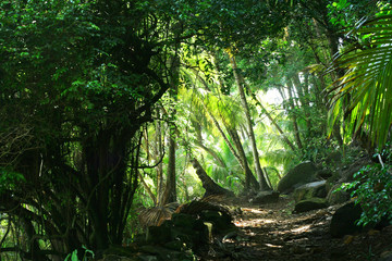 Beautiful and mystical path through coastal rainforest. Bright green canopy and coconut trees on the background.