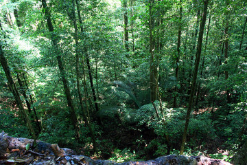 view of beautiful and mystical untouched jungle of French Guiana. ancient trees on green forest background.