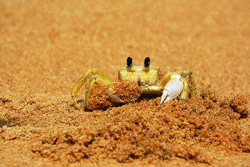 a close up of a crab on a beach digging sand