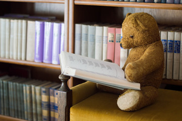 Teddy bear reads a book in the library - studying scene