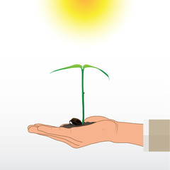 Hand holding sprout on white background, environmental concept vector illustration