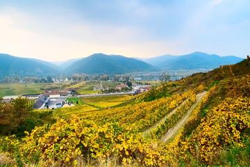 Wachau landscape in October