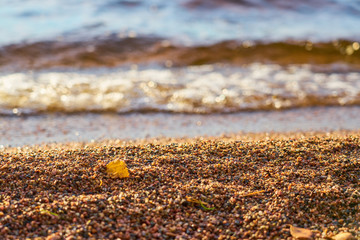 Yellow autumn leaf on a beach with blurred  waves on a background on sunny day.