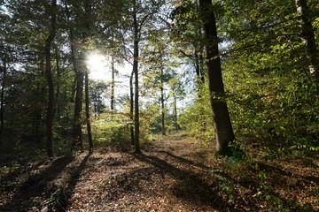 Wald Heimerdingen