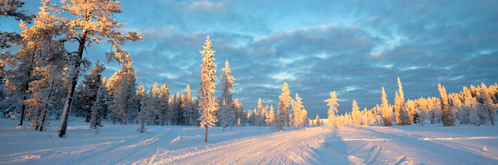 Fototapete - Snowy panoramic landscape, frozen trees in winter in Saariselka, Lapland, Finland