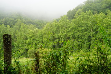 view of forest