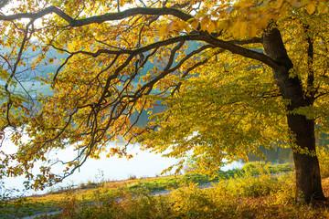 Canvas Prints Autumn Autumn in the park / autumn oak near the lake