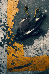 Dead Bird Laying On Distorted Concrete Painted Road