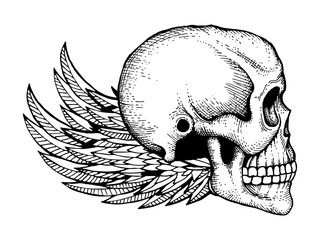 Black and white ink sketched human skull with wings isolated on white background. Vector skull horror and wing illustration