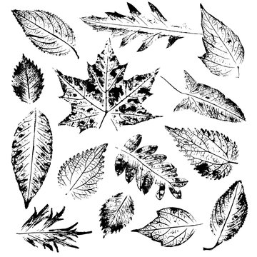 Isolated black stamps of leaves of tree, bush and plants on white background. Leaf ink print. Set of plant imprint.