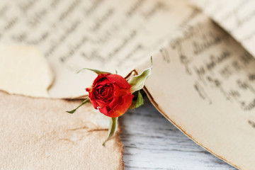 Red rose and love letter.