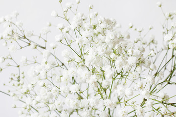 Background with tiny white flowers (gypsophila paniculata), blurred