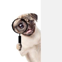 Puppy looks through a magnifying lens. Isolated on white background