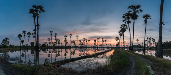 Panorama sunrise with palm trees