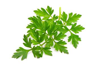 Fresh parsley, isolated on white backgroound, Close-up