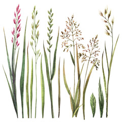Set of watercolor wild herbs. Hand-drawn floral elements.