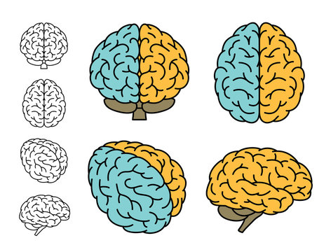 Human brain anatomy. Set of multiple views. Left Brain versus Right Brain. Vector illustration.