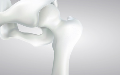 Thigh bone and human sphincter. On a white background - 3D rendering can be word or word paste.