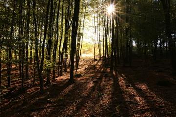 Herbst auf dem Fröndenberg in Iserlohn