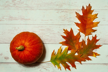 Autumn decor. Bright leaves on light background, close up,copy space