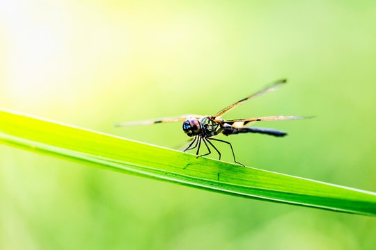 The dragonfly in blur background