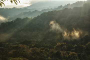 Morning light rays on treetops, Munduk, Bali
