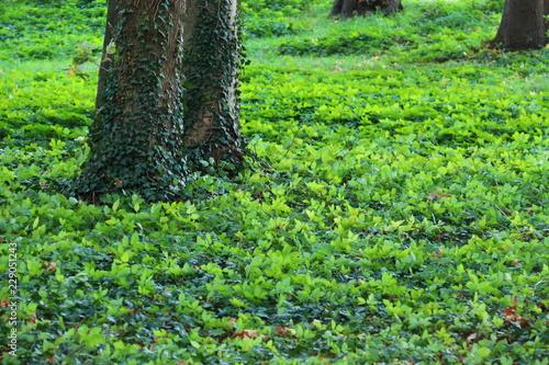 Tiefgrune Bodendecker Unter Alten Baumen Im Park Stock Photo And