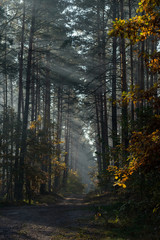 Country road in the forest. The sun's rays shine through the branches of trees.