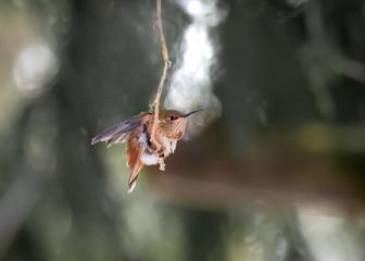 Smokin' hot hummingbird