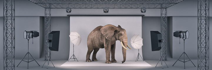 photo studio with elephant. 3d rendering Wall mural