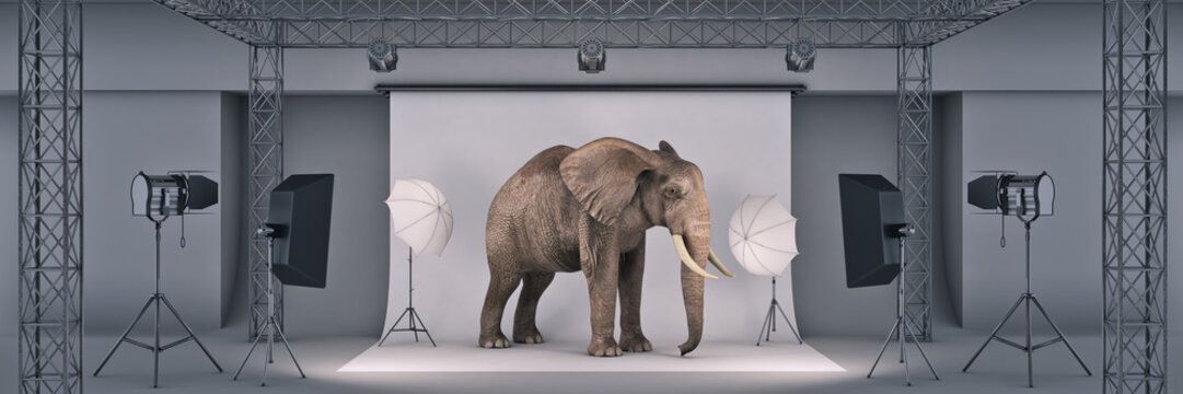 photo studio with elephant. 3d rendering