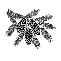 Hand drawn spruce tree branch
