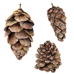 Watercolor pine cones set. Hand painted fir cones isolated on white background. Nature illustration. Holiday symbol for design, print.
