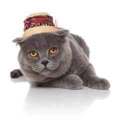 grey scotish fold wearing a straw hat lying