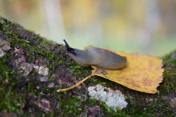 Snail crawling on a tree.