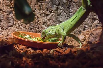 lizard eats foliage zoo Wall mural