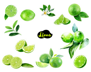 Lime fruits watercolor set hand draw illustration.