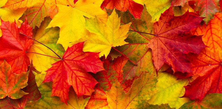Bright red, orange and yellow Nature autumn background