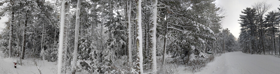 Wall Mural - Michigan Winter Forest Panoramic