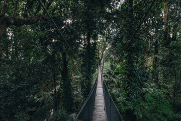 canopy walk (tree top walk), new activity for travel in the forest by walking across the long wooden bridge in Chiang rai, north of thailand