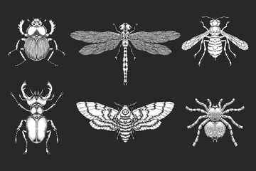 Vector set of hand drawn insects. Different insects in realistic style.