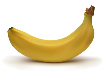 Realistic yellow banana with shadow in vector mesh