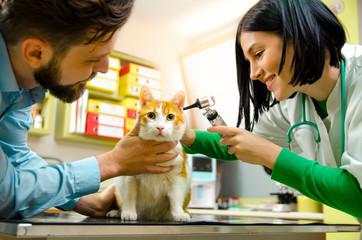 Cat at vet office , ears checkup