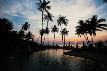 Amazing twilight on the sea beach in subtropics with palm silhouettes.